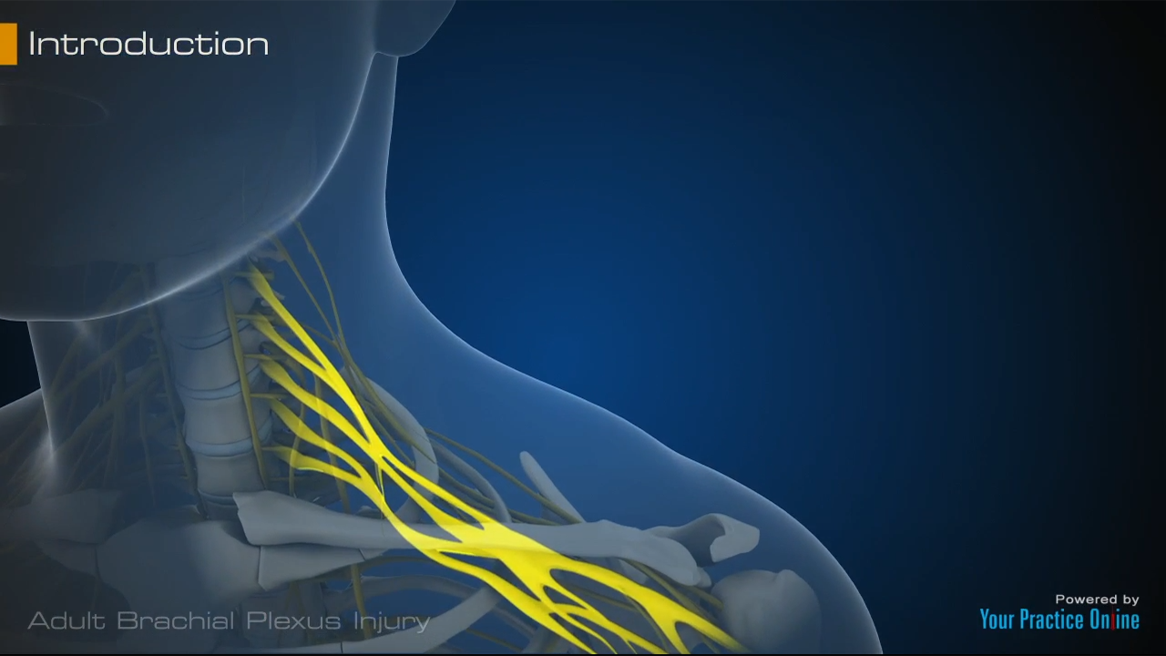 X furthermore Da D A C F F as well Shoulderdystocia Thumbnail additionally Testing Skin Sensation besides Thumbnail Large. on brachial plexus