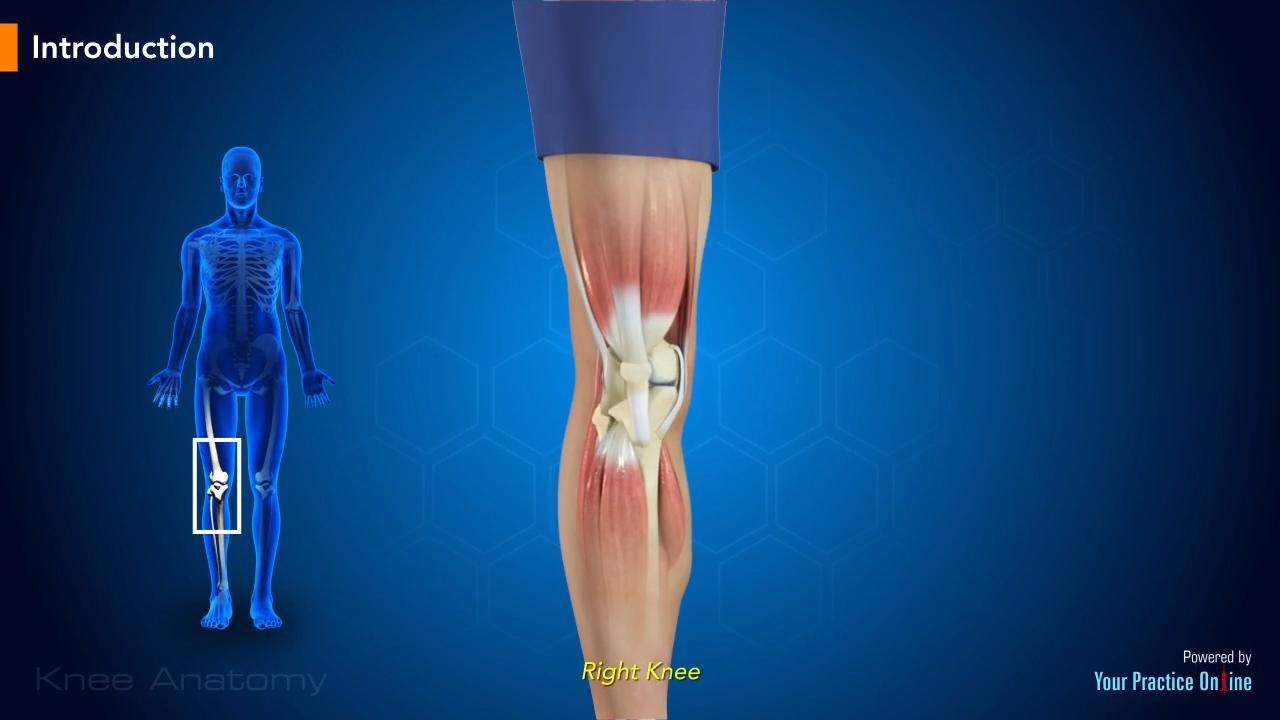 Knee Anatomy | Knee Orthopaedics Videos | Your Practice Online Education