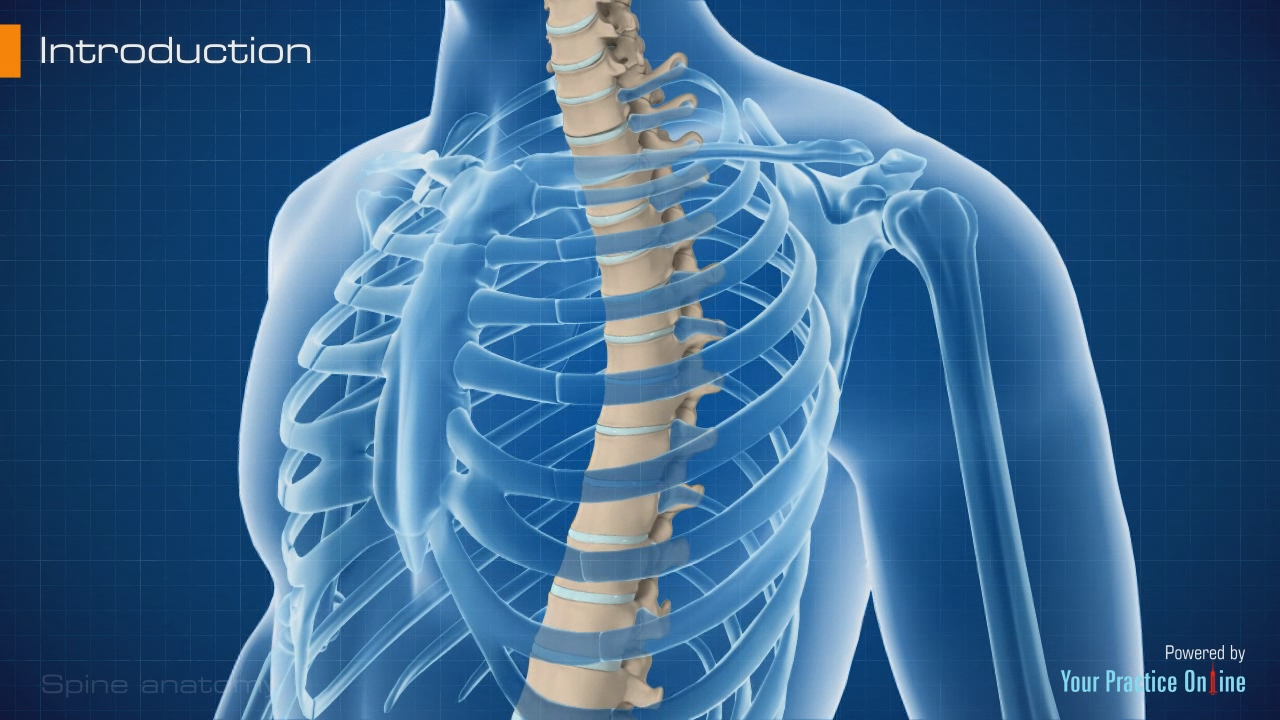Spine Anatomy Video | Spinal Structure | Spinal Cord Anatomy Video