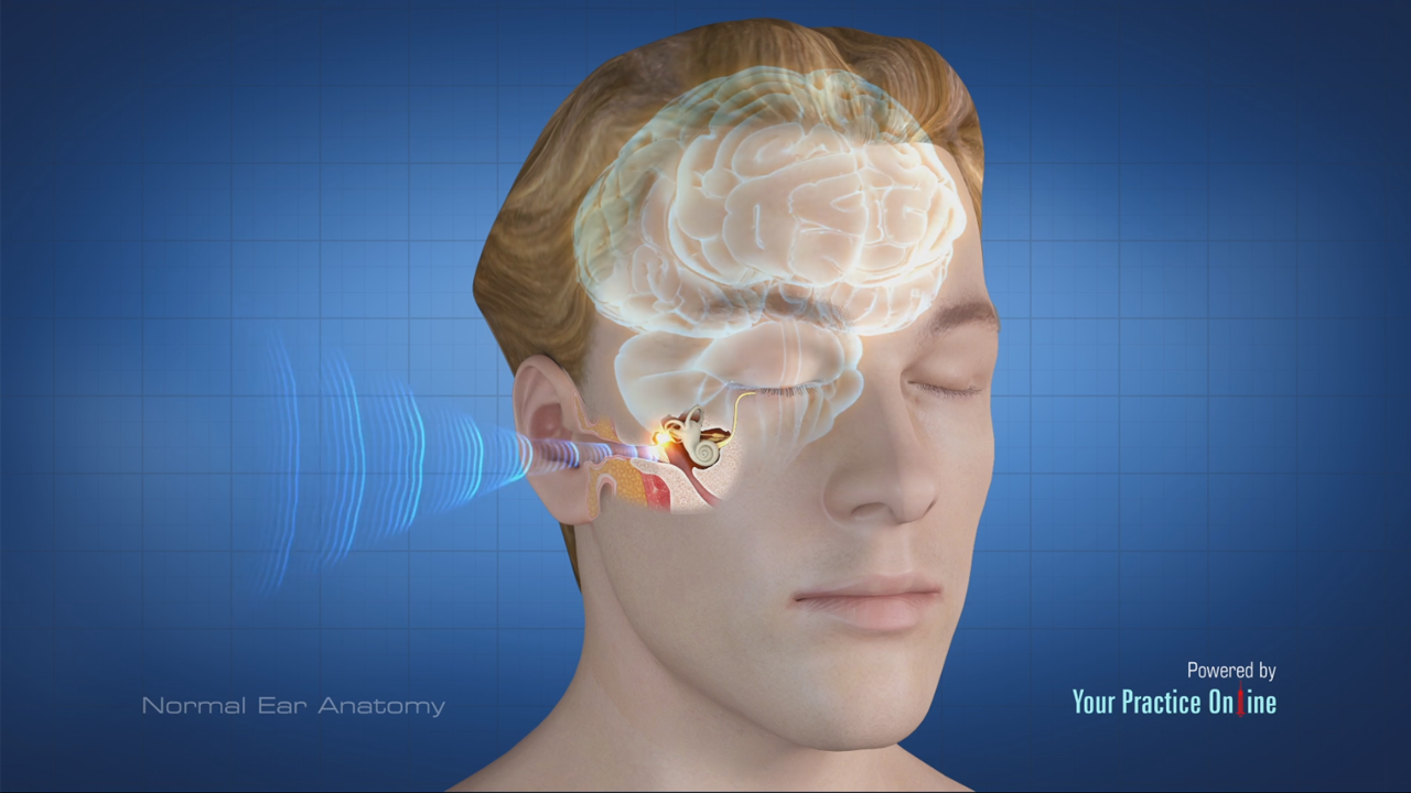 Normal Ear Anatomy | Ear ENT Videos | Your Practice Online Education