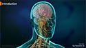 Endoscopic craniotomy microvascular decompression for trigeminal neuralgia or hemifacial spasm